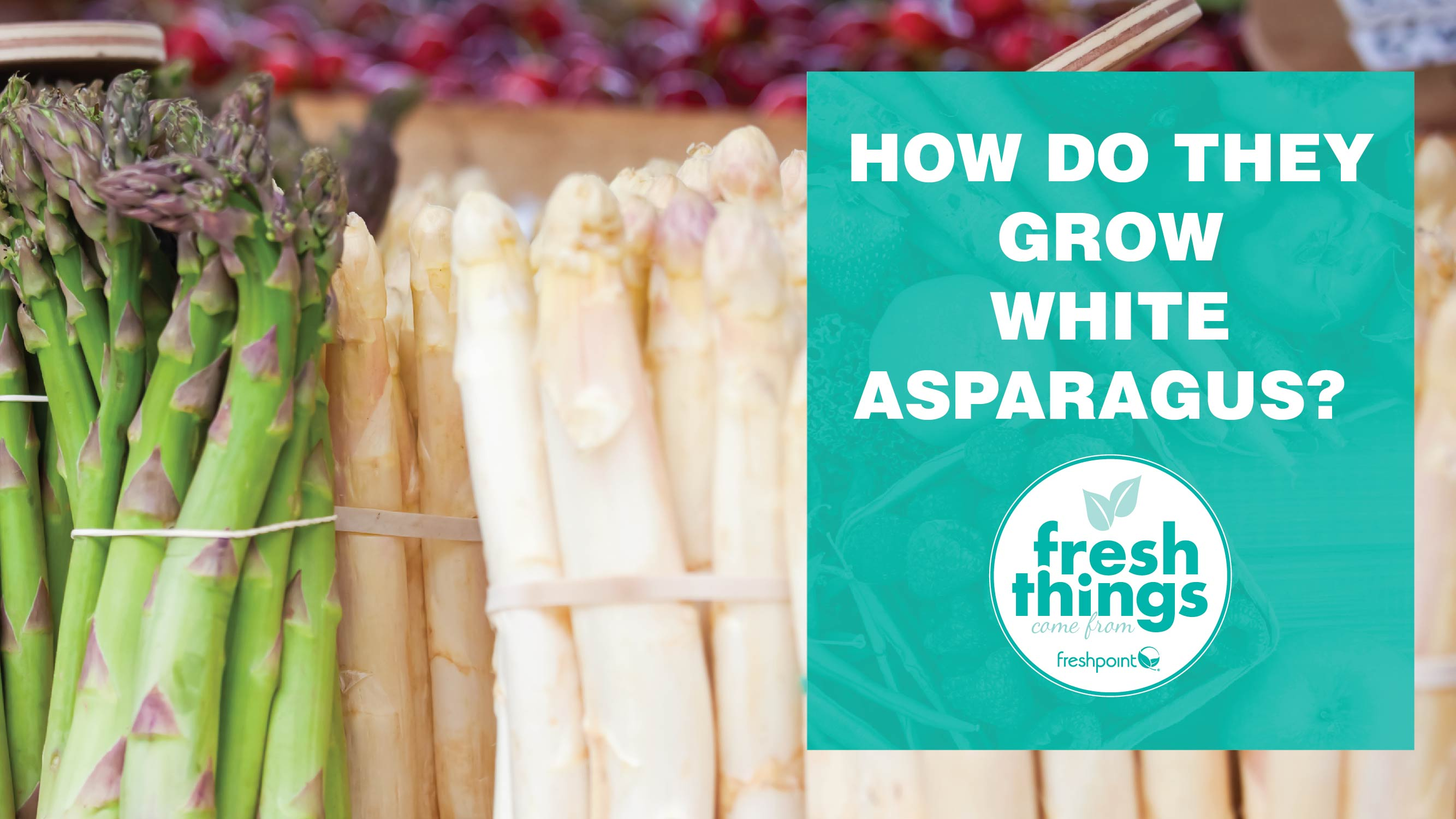 freshpoint-produce-how-do-they-grow-white-asparagus