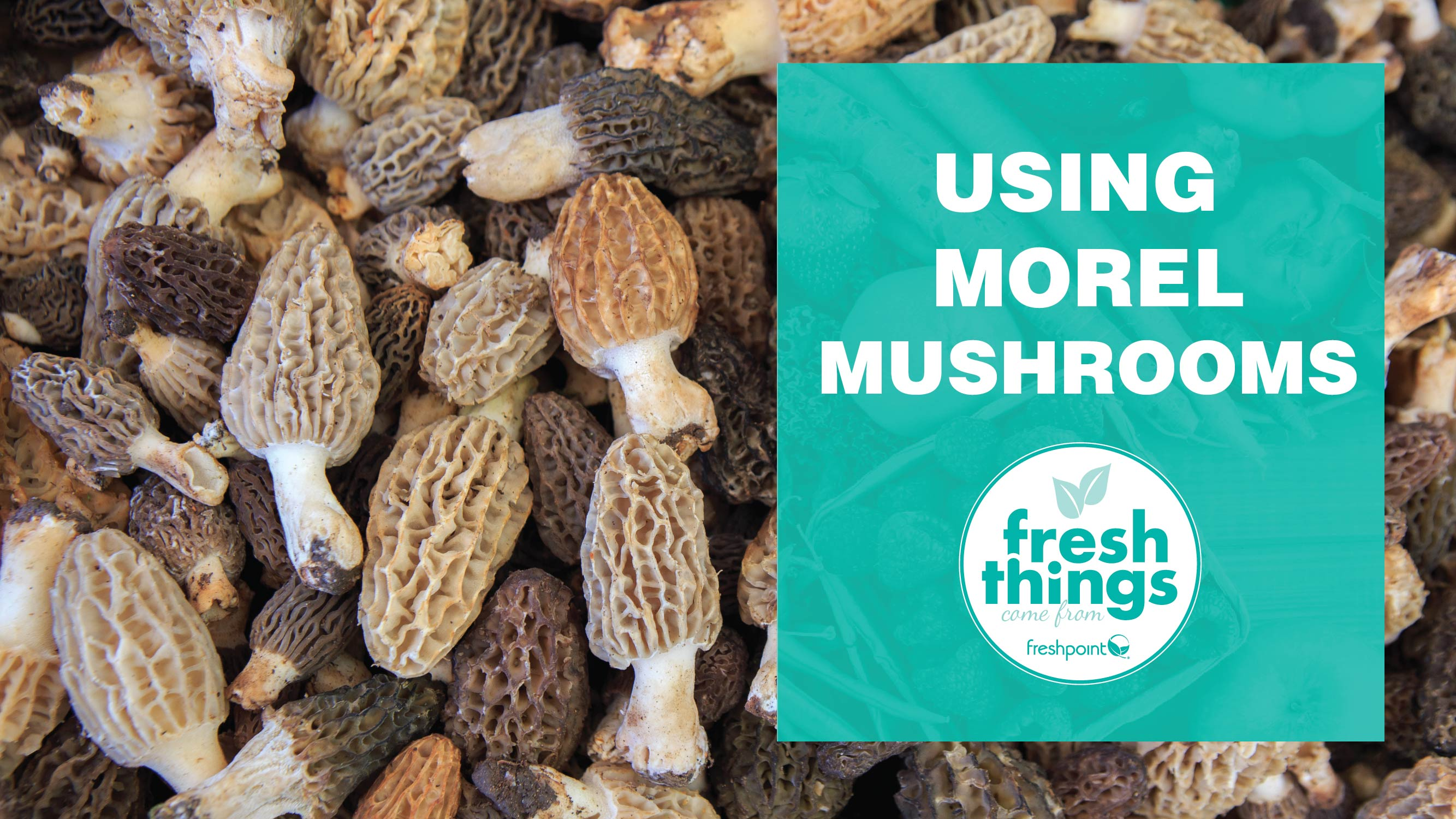 freshpoint-produce-how-to-clean-morel-mushrooms