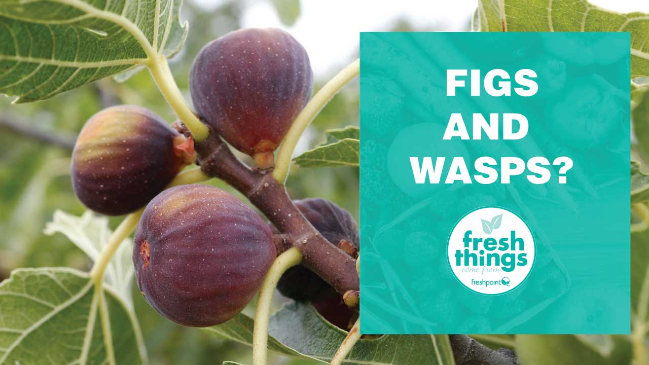 figs-freshpoint-produce