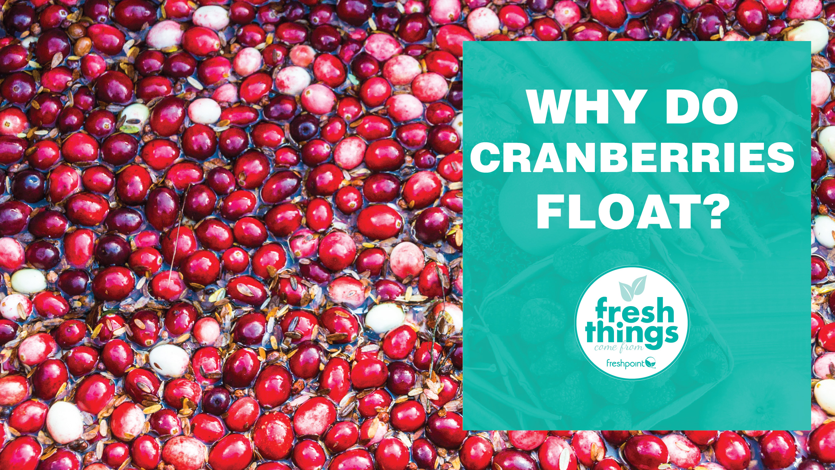 Freshpoint-produce-why-do-cranberries-float