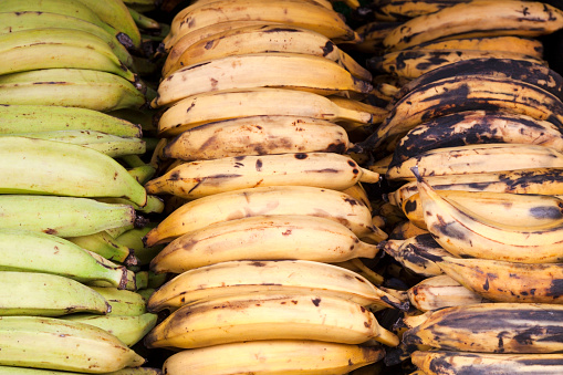 freshpoint-produce-plantain-colors