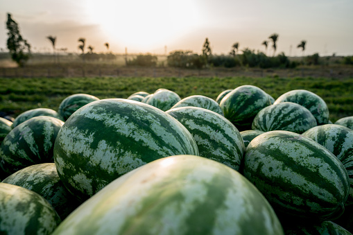freshpoint-produce-101-melons-selection