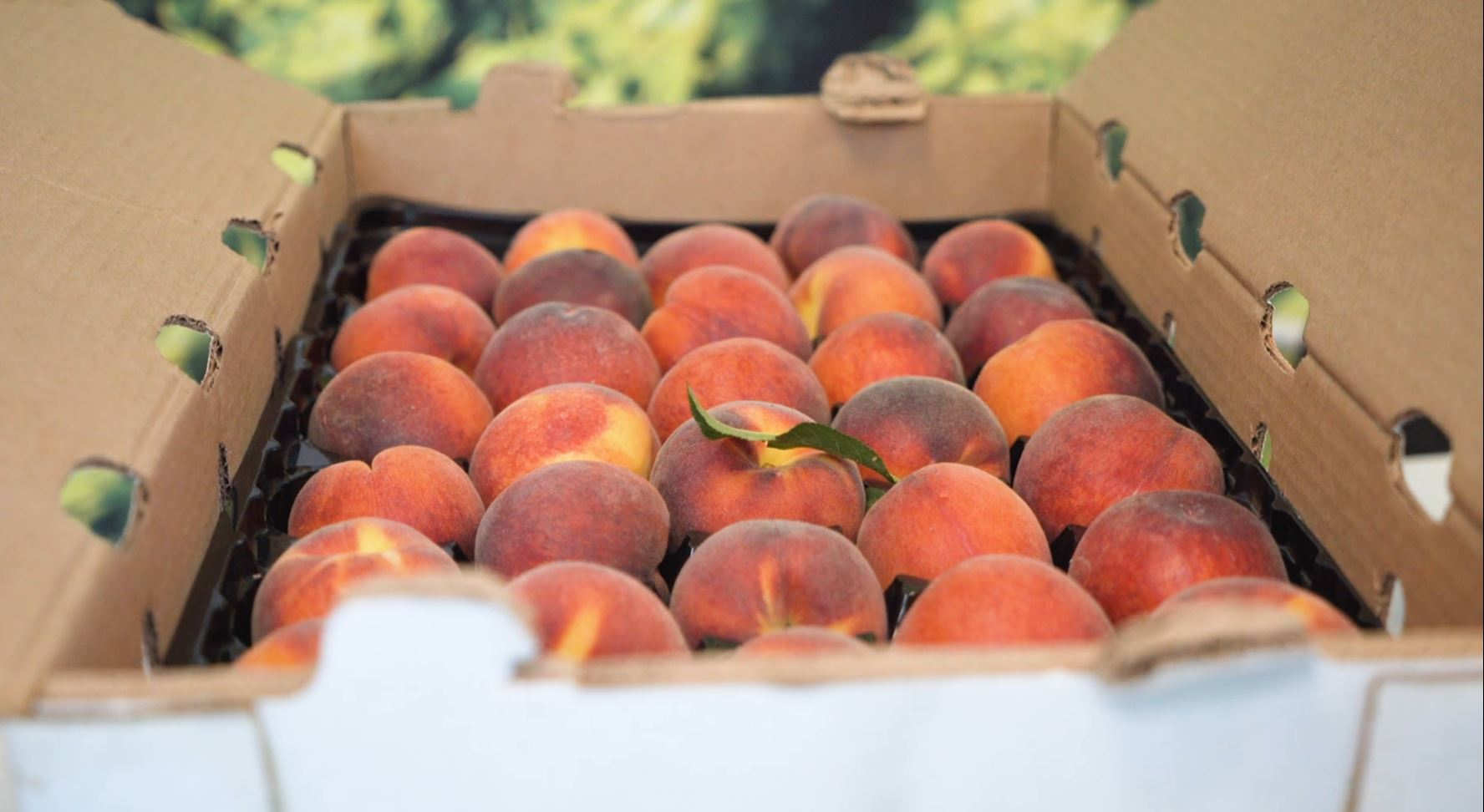 freshpoint produce 101 stone fruit tay pack