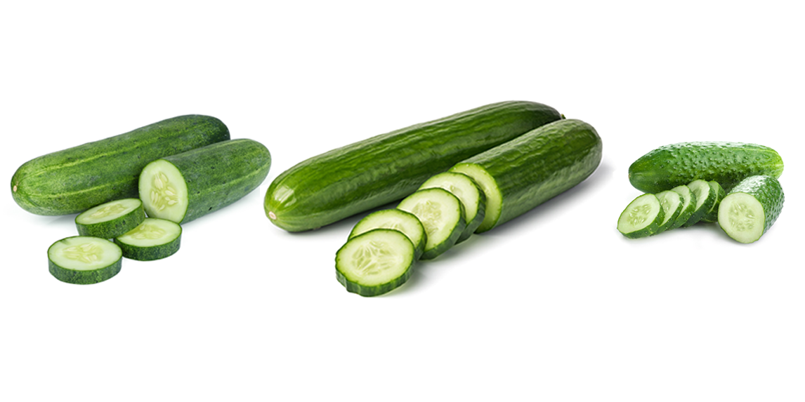 produce 101 cucumber types