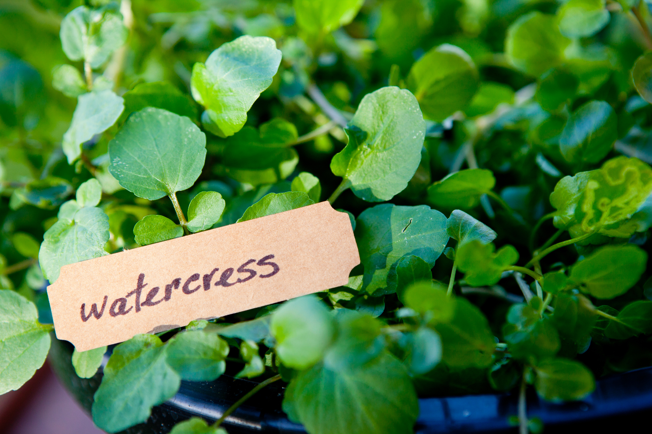 freshpoint-produce-101-tender-greens-watercress