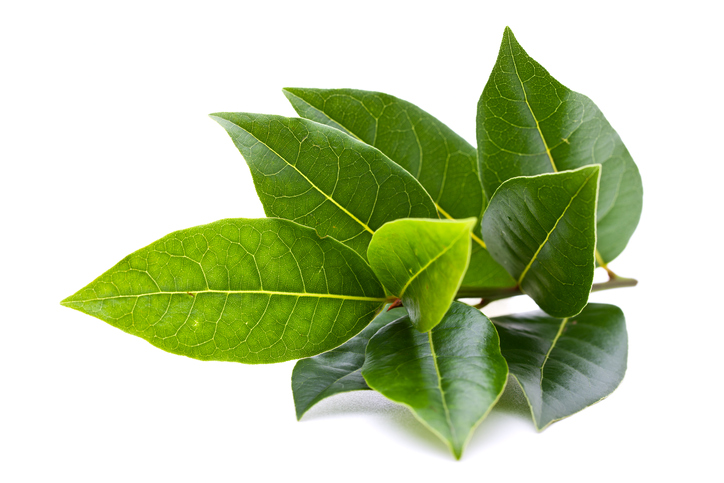 freshpoint bay leaves