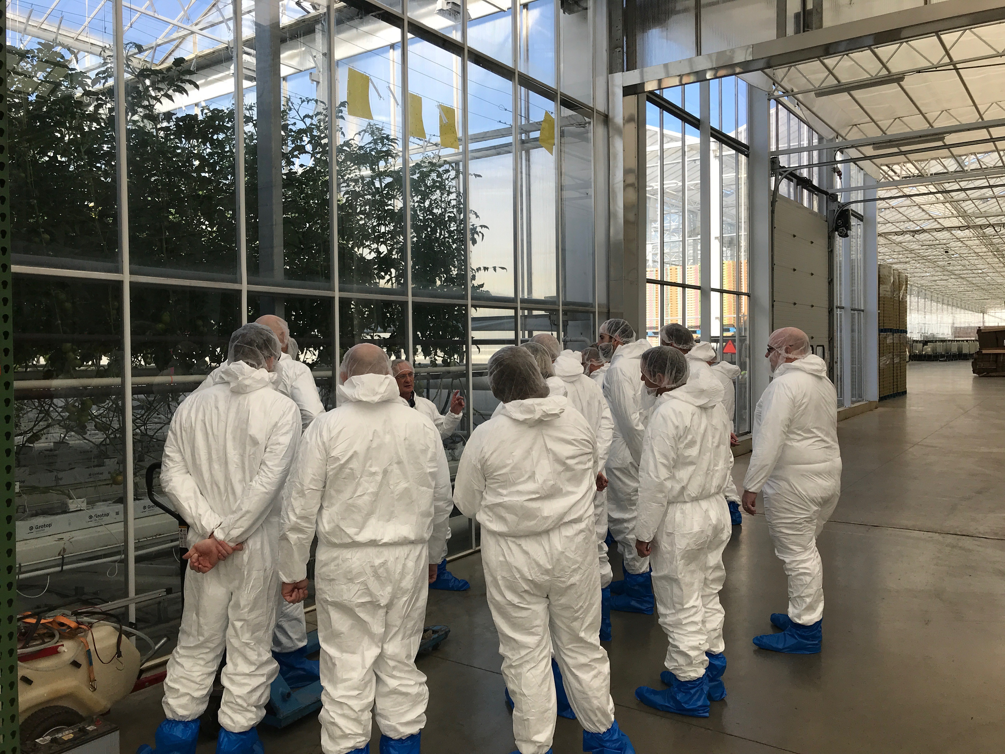 freshpoint-produce-mastronardi-tour-greenhouse-tomatoes-in-the-winter